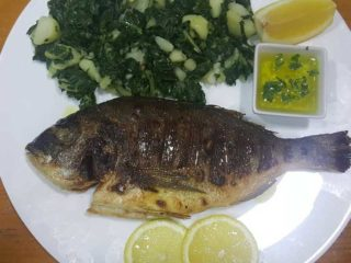 Gilt-head bream delivery